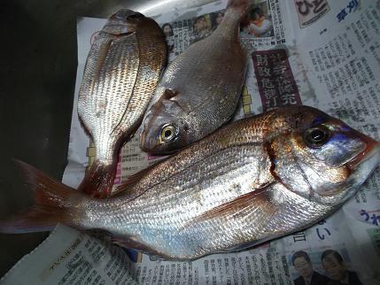 f:id:fujiwarakominka:20120612180742j:image