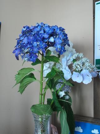 f:id:fujiwarakominka:20120614163032j:image