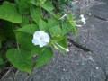 f:id:fujiwarakominka:20120709191548j:image:medium