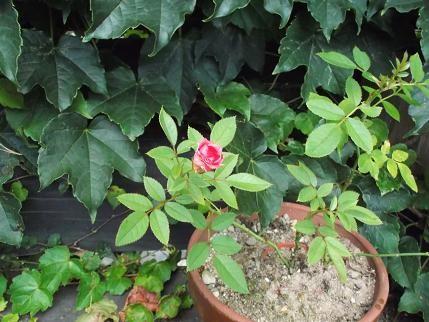 f:id:fujiwarakominka:20120805185642j:image