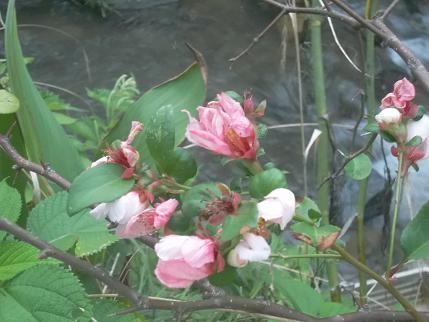 f:id:fujiwarakominka:20120818184852j:image