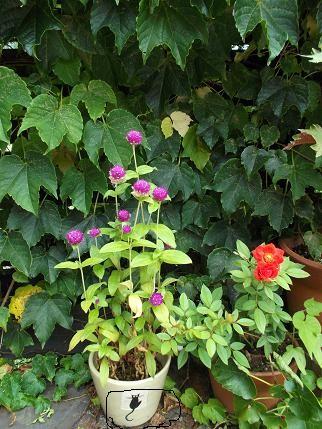 f:id:fujiwarakominka:20120829102852j:image