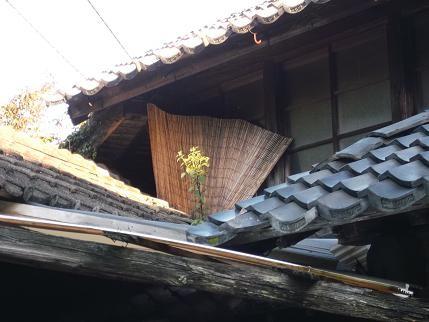 f:id:fujiwarakominka:20120921072029j:image