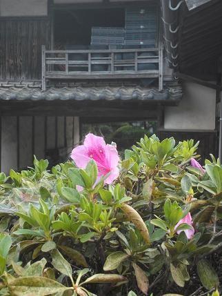 f:id:fujiwarakominka:20121104093228j:image