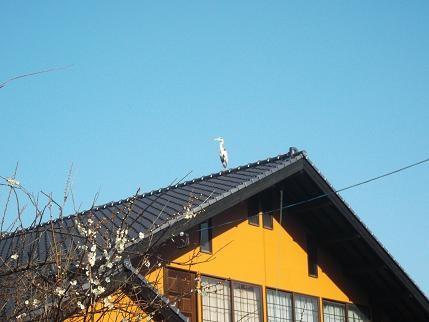 f:id:fujiwarakominka:20130228091428j:image