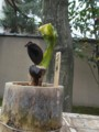 f:id:fujiwarakominka:20130317101319j:image:medium