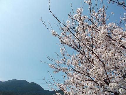 f:id:fujiwarakominka:20130324102706j:image