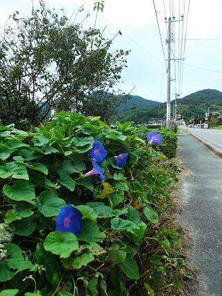 f:id:fujiwarakominka:20130929095659j:image