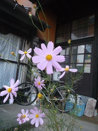 f:id:fujiwarakominka:20131031154948j:image
