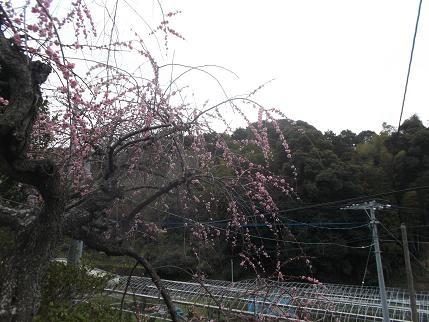 f:id:fujiwarakominka:20140215115202j:image