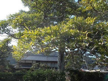 f:id:fujiwarakominka:20140221141909j:plain