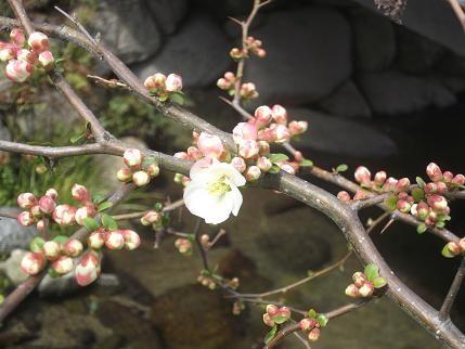 f:id:fujiwarakominka:20140304123108j:image