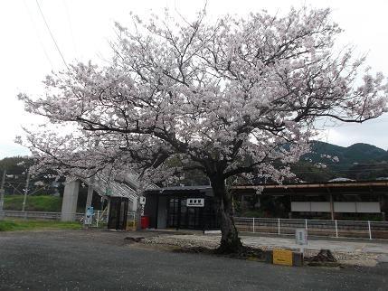 f:id:fujiwarakominka:20140329094619j:image