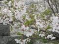 f:id:fujiwarakominka:20140331125929j:image:medium