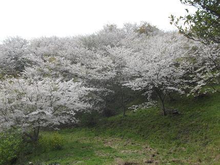 f:id:fujiwarakominka:20140331133721j:image