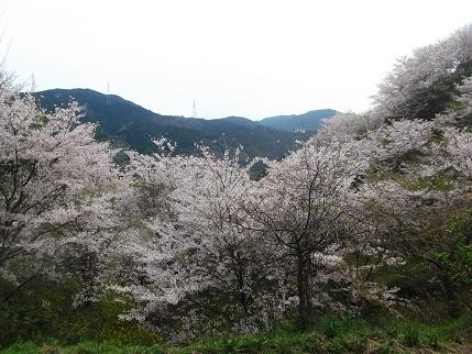 f:id:fujiwarakominka:20140331133726j:image