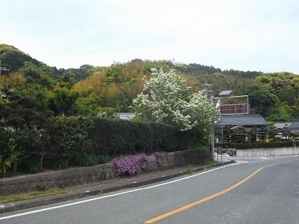 f:id:fujiwarakominka:20140426114713j:image