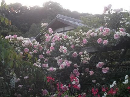 f:id:fujiwarakominka:20140518181438j:image