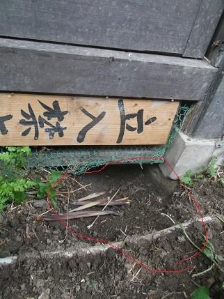 f:id:fujiwarakominka:20140526080230j:image