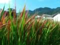 f:id:fujiwarakominka:20140917084314j:image:medium