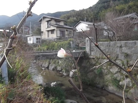 f:id:fujiwarakominka:20150128110855j:image