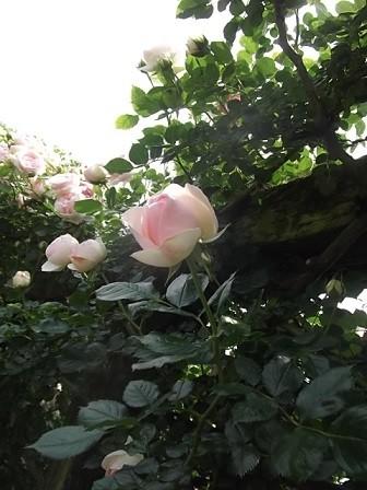 f:id:fujiwarakominka:20150514111228j:image