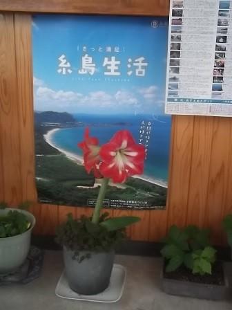 f:id:fujiwarakominka:20150523152245j:image