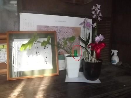 f:id:fujiwarakominka:20150902080050j:image