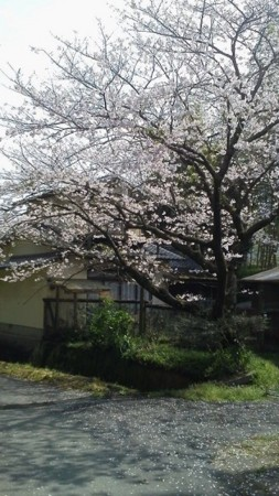 f:id:fujiwarakominka:20160402102433j:image