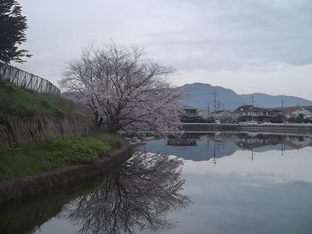 f:id:fujiwarakominka:20160403092637j:image