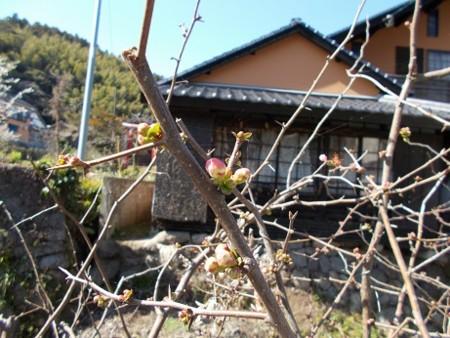 f:id:fujiwarakominka:20170219130523j:image
