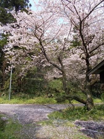 f:id:fujiwarakominka:20170412112223j:image