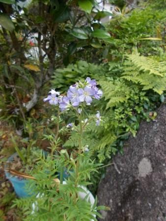 f:id:fujiwarakominka:20170611161241j:image