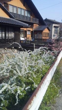 f:id:fujiwarakominka:20180326092822j:image
