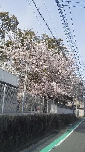 f:id:fujiwarakominka:20200403144555j:plain