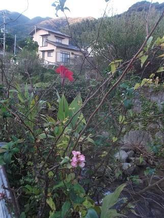 f:id:fujiwarakominka:20201020070901j:plain