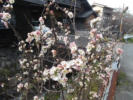 f:id:fujiwarakominka:20210303163715j:plain