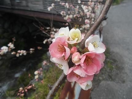 f:id:fujiwarakominka:20210303163722j:plain