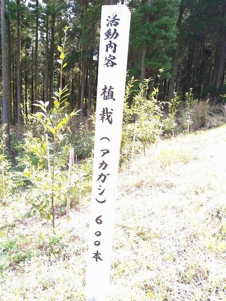 f:id:fujiwarakominka:20210410075437j:plain