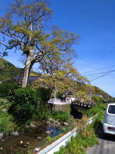 f:id:fujiwarakominka:20210428081321j:plain