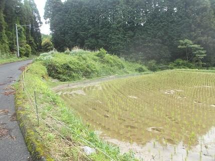 f:id:fujiwarakominka:20210516130157j:plain