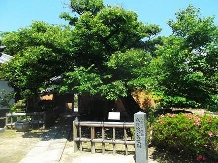 f:id:fujiwarakominka:20210523134111j:plain