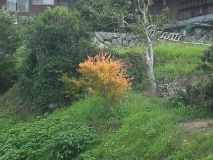 f:id:fujiwarakominka:20210722164450j:plain