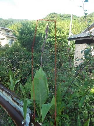 f:id:fujiwarakominka:20210724073056j:plain