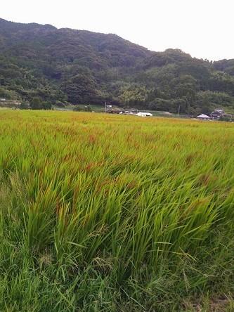 f:id:fujiwarakominka:20210908064437j:plain