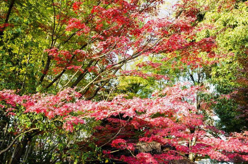 f:id:fukagawa1953:20161125092349j:plain