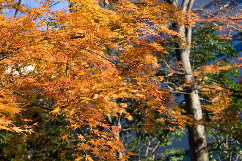 f:id:fukagawa1953:20161203170326j:plain