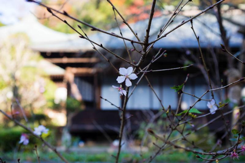 f:id:fukagawa1953:20161206202743j:plain