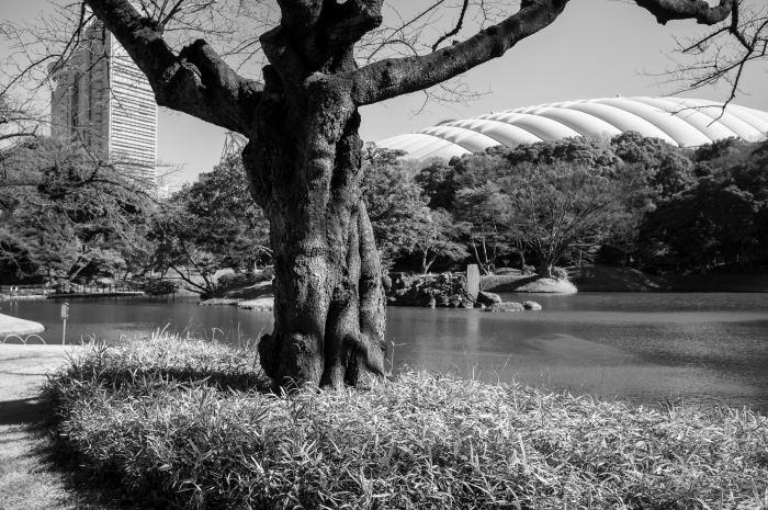 f:id:fukagawa1953:20170207221334j:plain