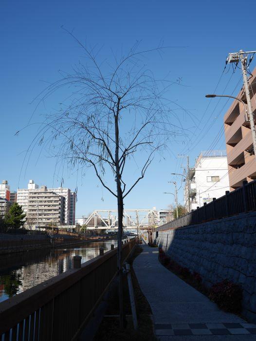 f:id:fukagawa1953:20170213085449j:plain